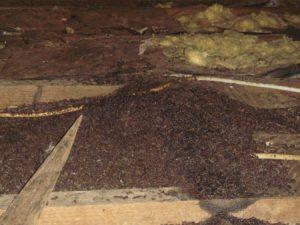 bat droppings